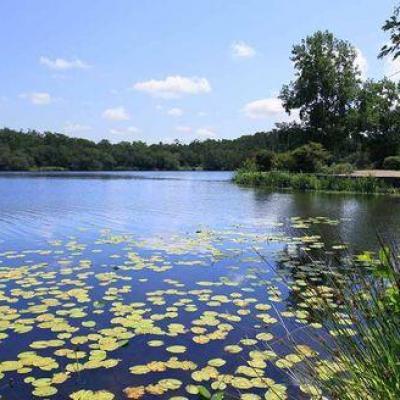 Lacs des landes 2